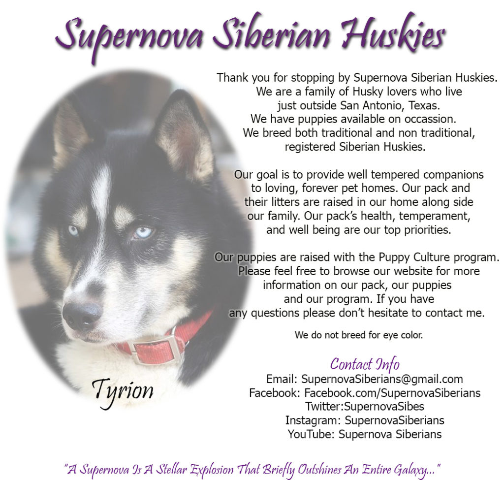 Texas Siberian Husky Breeder, Supernova Siberians, Texas Huskies