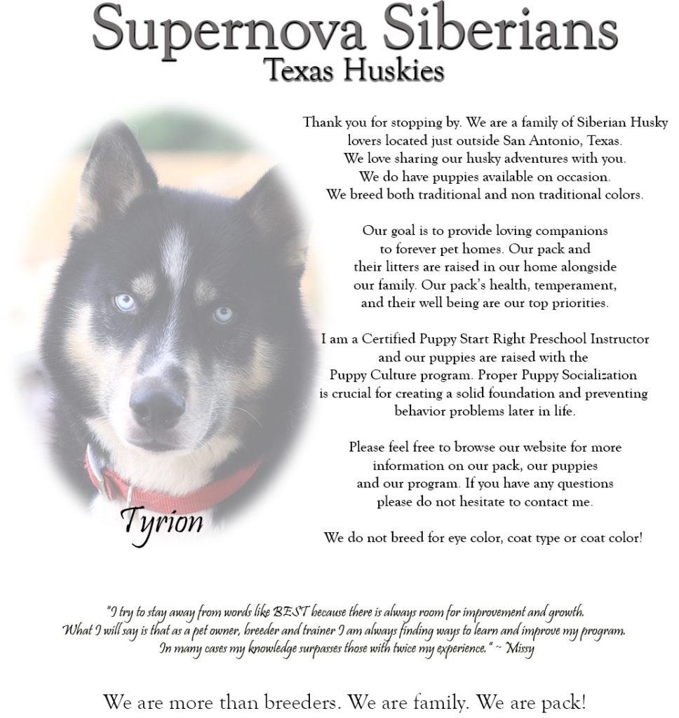 Supernova Siberian Huskies Texas Huskies Texas Husky Breeder