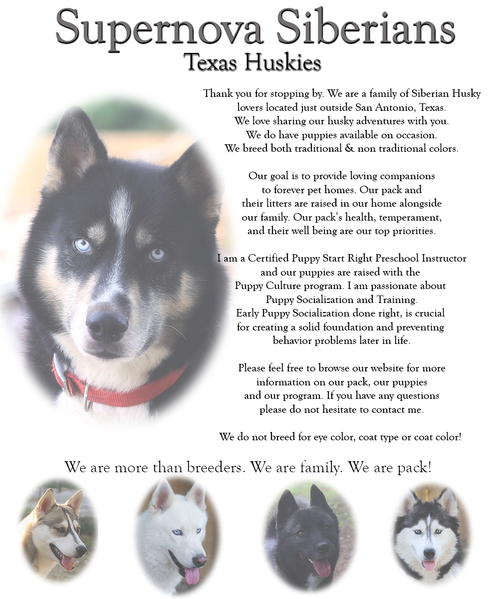 Supernova Siberian Huskies, Texas Huskies, Texas Siberian Husky Breeder